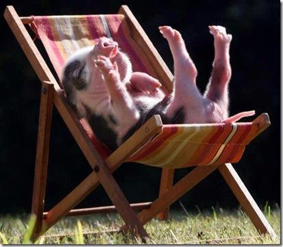 pig life on jewish farm