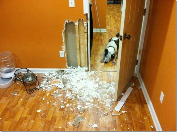 dog-destroys-wall-home-1
