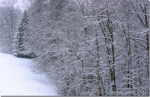 Field_Dec292012