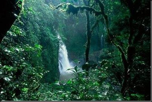 padurea-amazoniana-poze