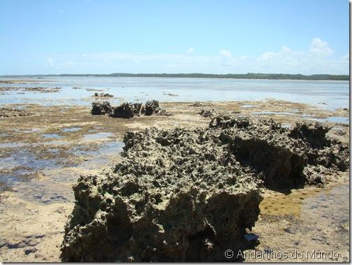 Praia do Patacho Recifes de Coral Alagoas Brasil Rota Ecológica