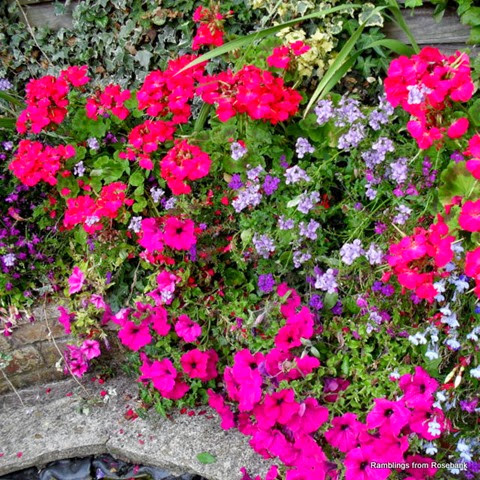 summer container garden