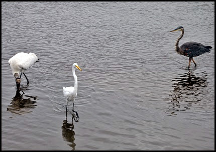 02e - birds - Wood Stork, Great White Egret, Great Blue Heron
