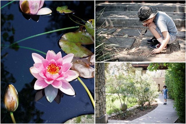 Arboretum collage1