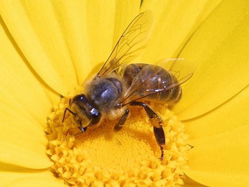 http://www.public-domain-image.com (public domain image)