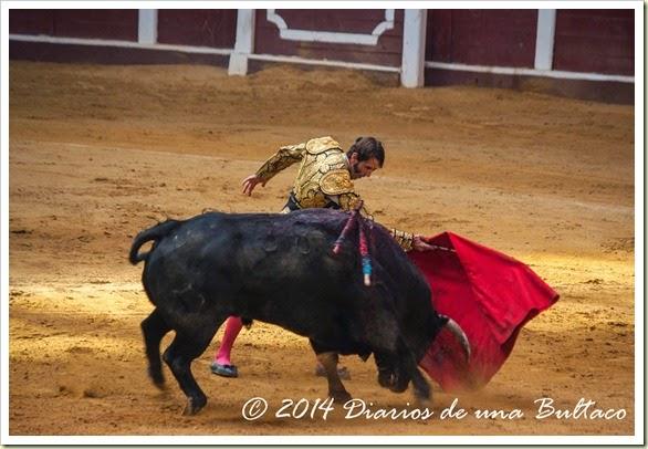 Toros 2014 (1)-31