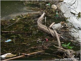 Nepořádek u vody 5.jpg