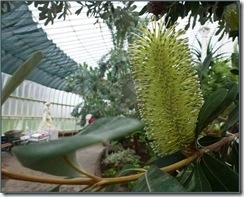 glasgow botanics 022