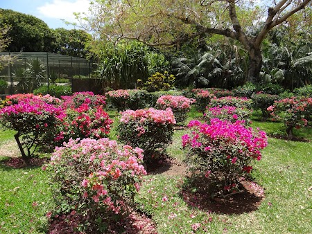 Flori tropicale in Mauritius