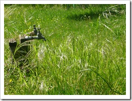 robinet dans l'herbe