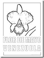 FLOR DE MAYO 1
