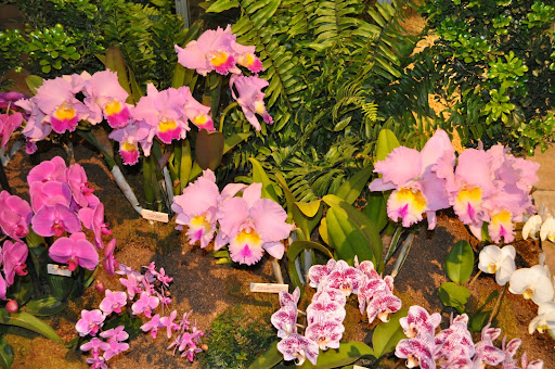 Have you ever seen orchids like these?
