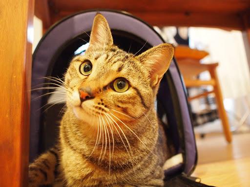 [写真]「猫小屋」から