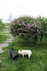 Viewing the Lilac