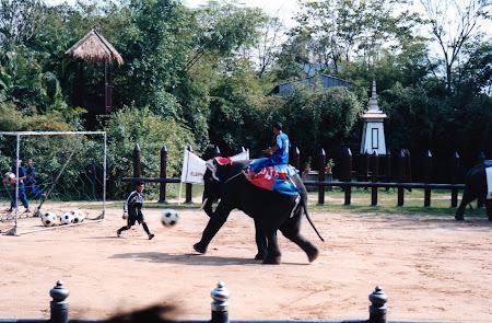 Obiective turistice Bangkok: elefanti joaca fotbal