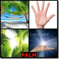 PALM- 4 Pics 1 Word Answers 3 Letters