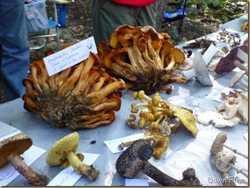 Mushroom festival_051