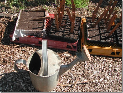 Seed trays lined with old cotton cloth form shallow trays for bulk plantings of lettuce seed, spring onions and Chinese wombok. This heirloom watering can is used to fetch pure rainwater from the tanks to get the seedlings started; the salt content of rain water (unlike Adelaide's town water) is zero.