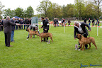 20100513-Bullmastiff-Clubmatch_31157.jpg