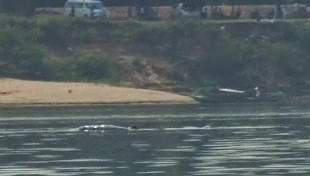 delfines Irawadi en el Mekong