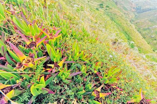 zielona-dolina