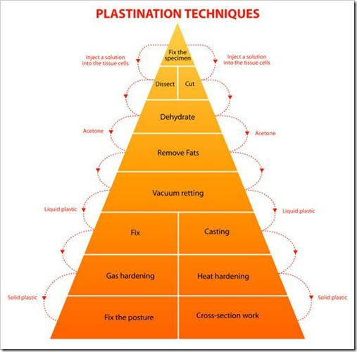 plastinationpyramid_1