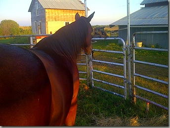 BB and NEW MARE 012