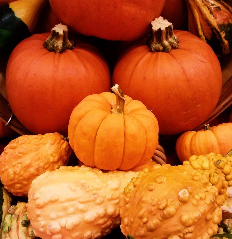 [MaggieLamarre-pumpkin%255B5%255D.jpg]