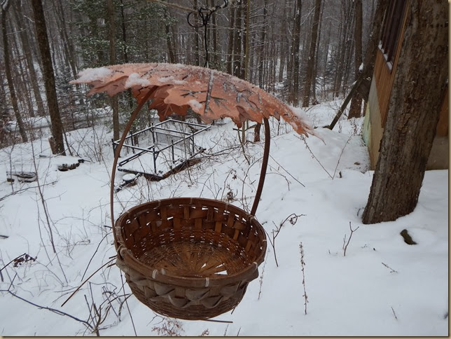 basket bird feeder hanging from clothesline with weather shield
