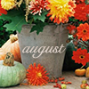 Months-August5bymagic_art