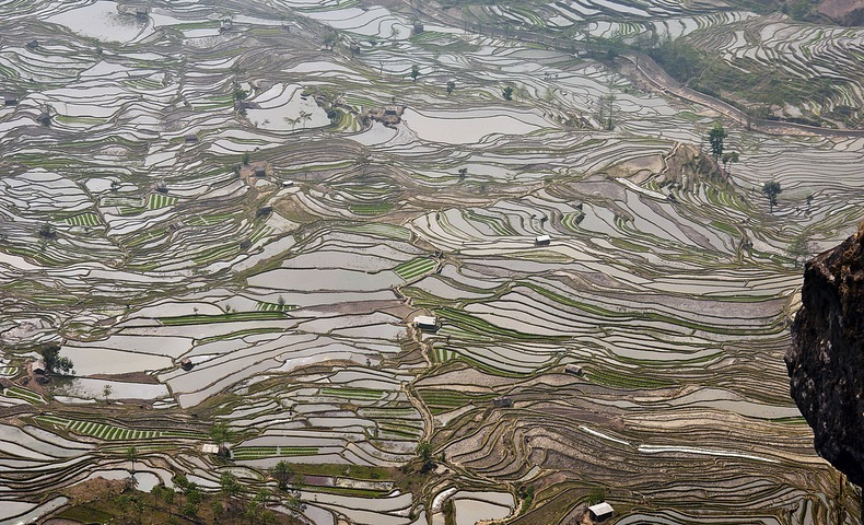 yunnan-rice-terraces2-1
