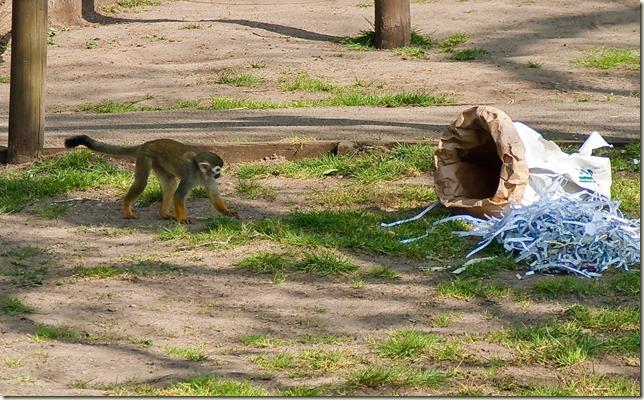 monkey-1-5