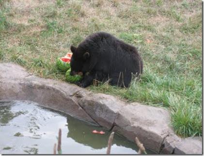 bear melon 3
