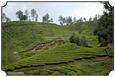 MNR_333_DSC0185_www.keralapix.com