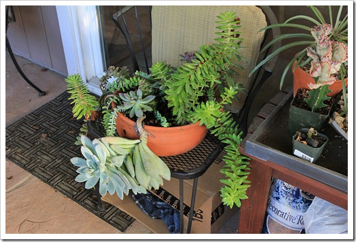 121117_plants_on_porch2