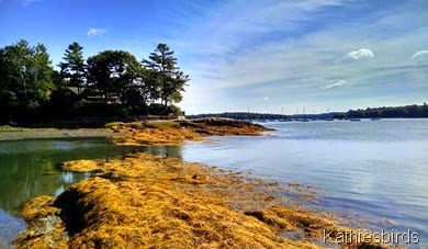20. eel grass in cove 9-3-14
