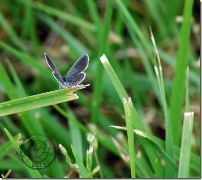 cr-sm-butterfly
