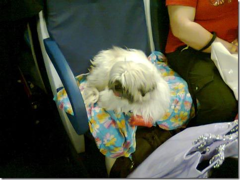cane comodamente seduto sul treno