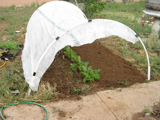 Hoop House 1.0 = saggy