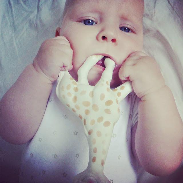 żyrafa-sophie-nie-piszczy
