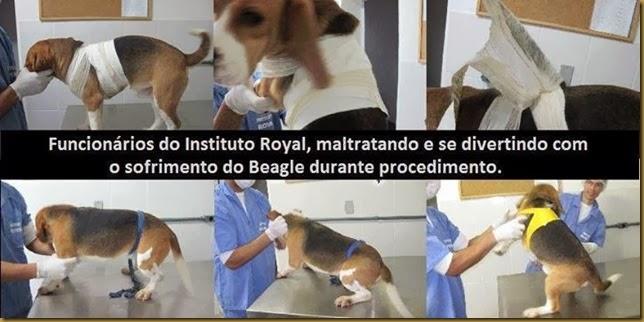 doc_royal6
