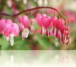 bloemen in de tuin 005