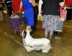 A Skye Terrier with hair handing down to the floor