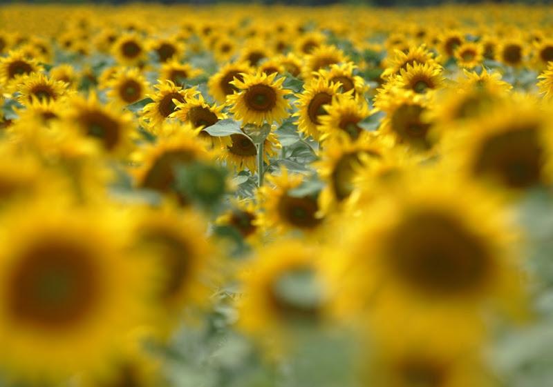 yellow_035.jpg