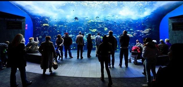 georgia-aquarium-04