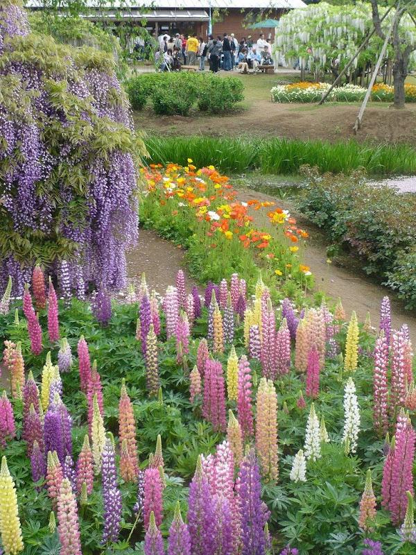 ashikaga-flower-park-20