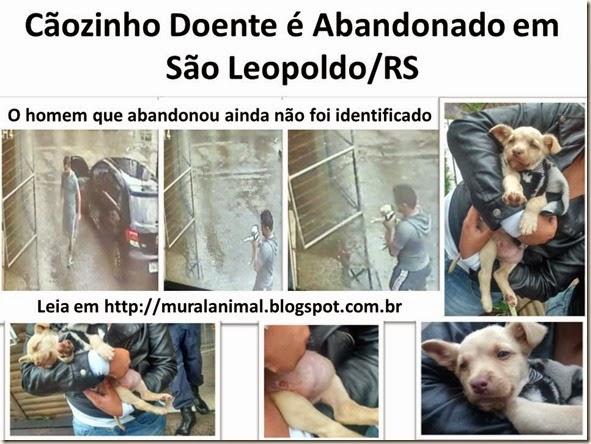 Cãozinho Doente é Abandonado em São Leopoldo