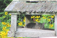 mama kitty in birdfeeder 7.23