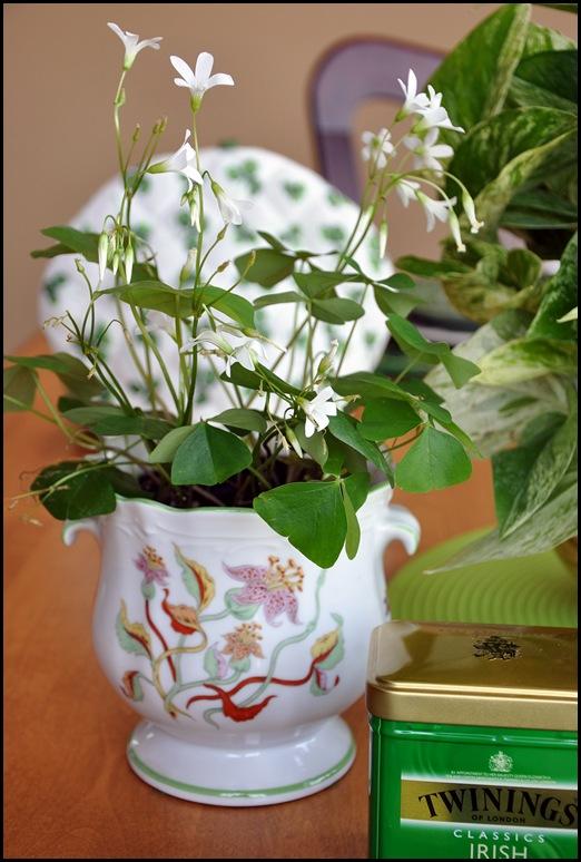 teacup 011