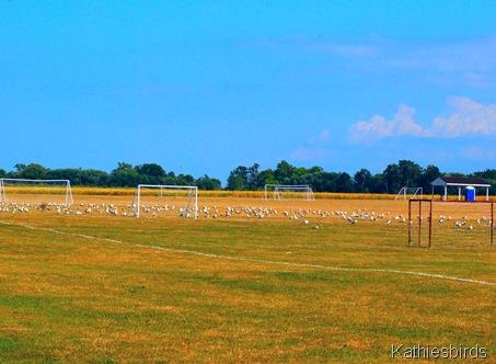 3. soccer field-kab